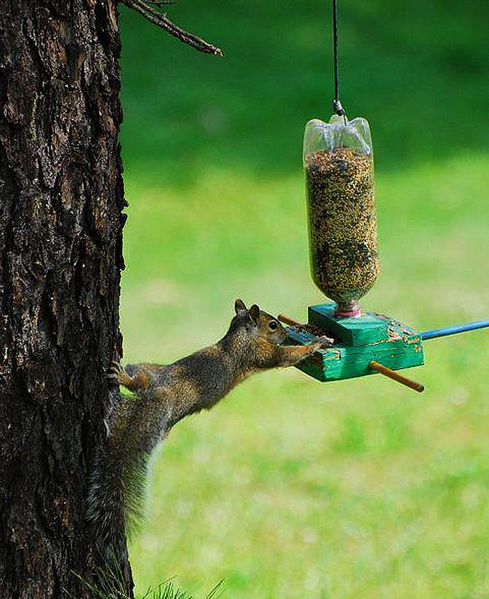 Comedero de pájaros (y ardillas)